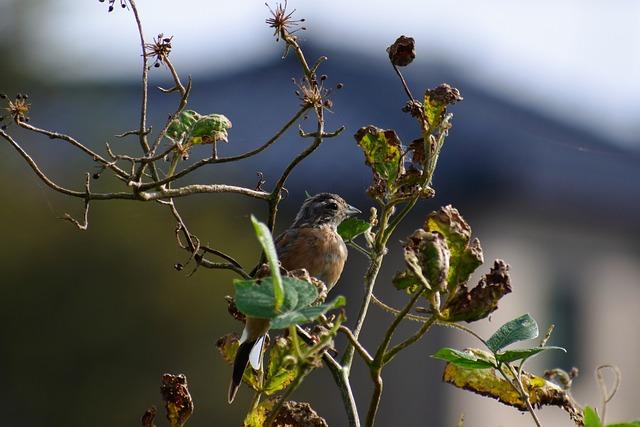 Animal, Wood, Wild Birds, Little Bird, Bunting