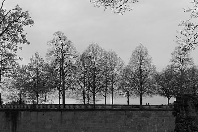 Heidelberg, Castle, Wall, Tree, Wood, Nature