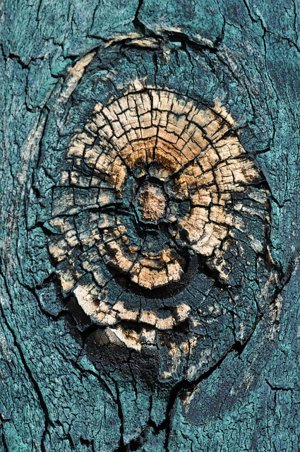 Macro, Wood, Branch, Close, Structure, Tree, Grooves