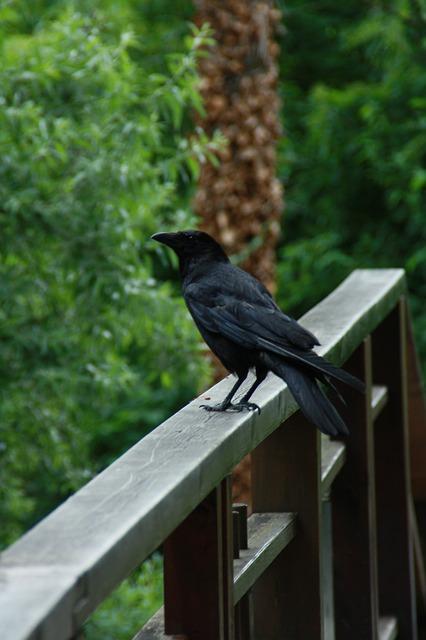 Bird, Nature, Animal World, Wood, Raven, Crow, Black