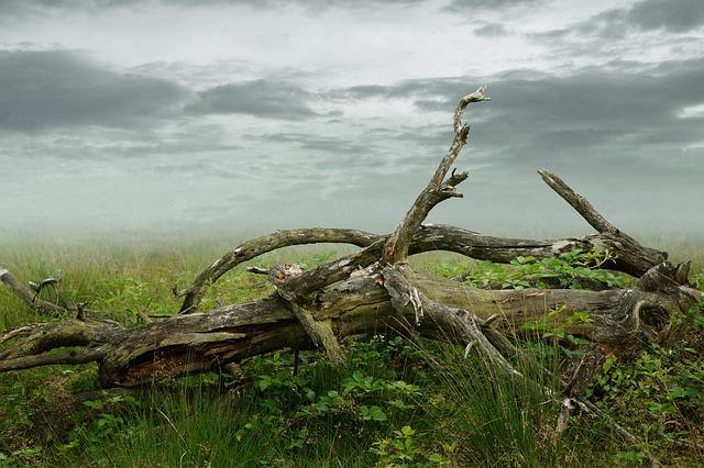 Dead Tree, Dead Plant, Decay, Tree, Dead, Log, Wood