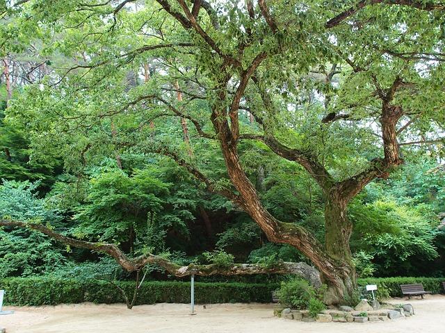 Anton, Dosan Seowon, Old Wood, Wood
