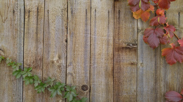 Vines, Autumn, Greeting Card, Wood Fence