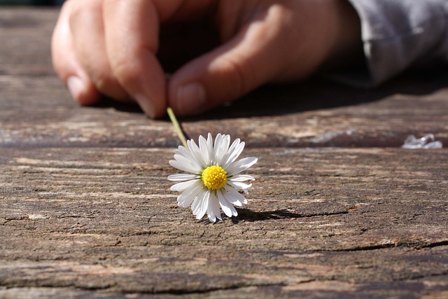 Daisy, Flower, Hand, Connectedness, Wood, Table, Luck