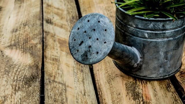 Watering Can, Garden, Box, Wood, Flowers, Grass