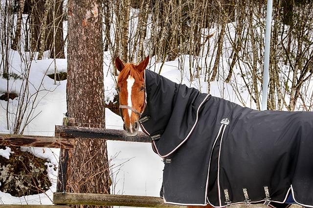 Horse, Farm, Winter, Tree, Snow, Outdoors, Wood