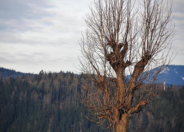 Tree, Kahl, Wood, Nature