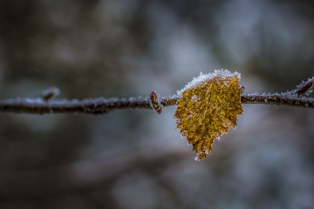 Nature, Autumn, Winter, Frost, Tree, Leaf, Wood, Plant