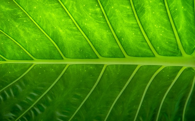 Leaf, Nature, Wood, Green, The Leaves, Hwalyeob