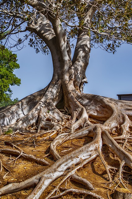 Landscape, Tree, Roots, Sky, Wood, Light