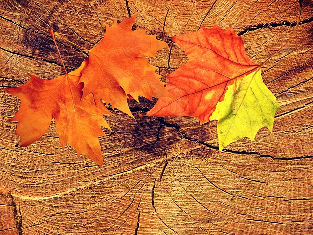Background, Texture, Wood, Fall Foliage, Maple, Leaves