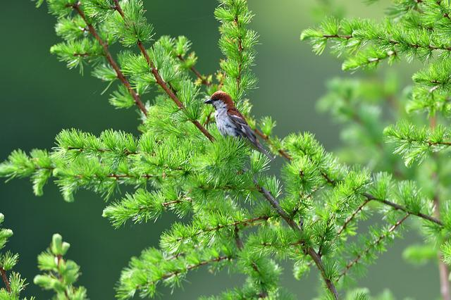 Natural, Wood, Plant, Leaf, Outdoors, Bird