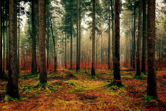 Wood, Tree, Nature, Landscape, Forest, Autumn, Green
