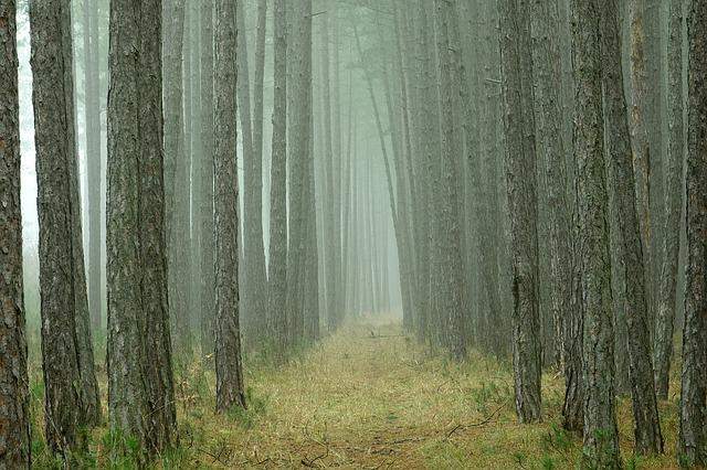 Wood, Nature, Tree, Background, Pine, Forest