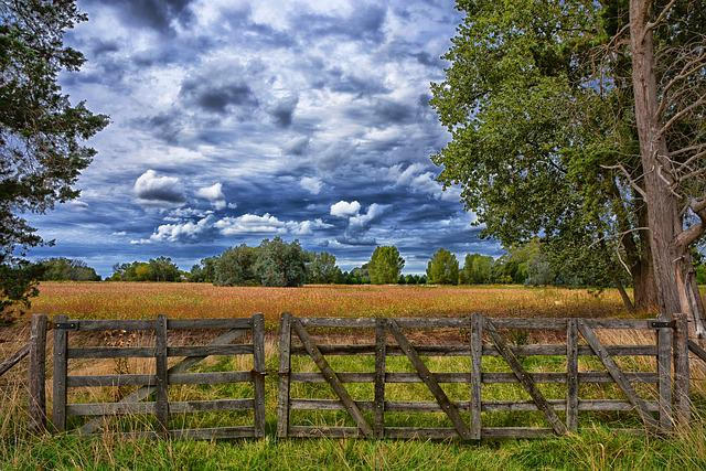 Wood, Nature, Outdoors, Tree, Landscape, Gate, Rural