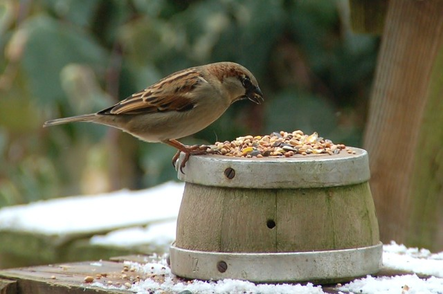 Nature, Birds, Wood, Outdoor, Sparrow