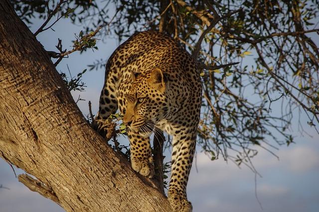 Tree, Wood, Nature, Plant, Animal, Leopard, Sky