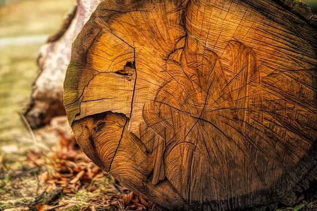 Nature, Wood, Tribe, Tree, Annual Rings, Structure, Log