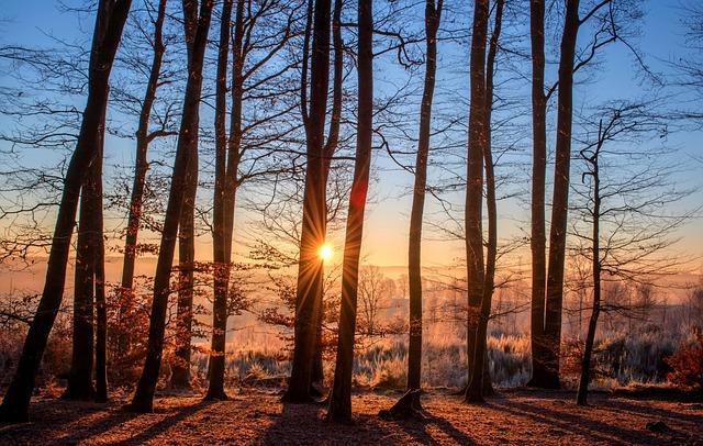 Forest, Landscape, Sun, Trees, Nature, Wood, Light