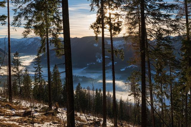 Wood, Nature, Landscape, Dawn, Pine, Winter, Valley