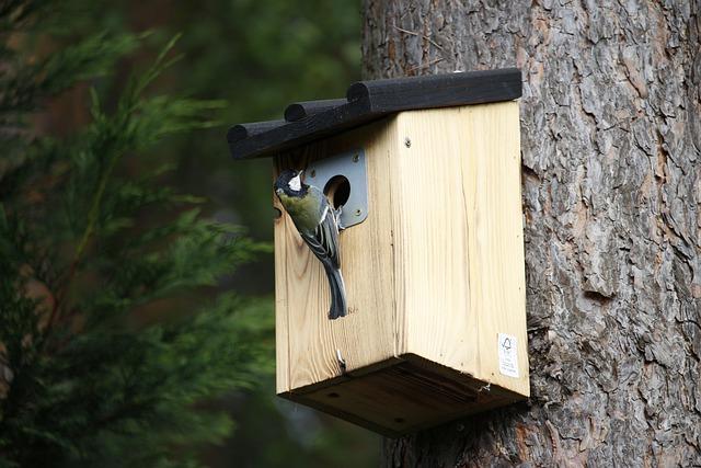 Wood Bird Shelter : Free photo shelter birds interesting bird feeder