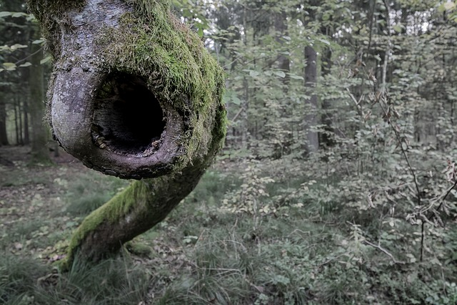 Forest, Tree, Shout, Eye, Scream, Wood, Trunk