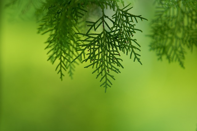 Abstract, Spring, Nature, The Leaves, Wood