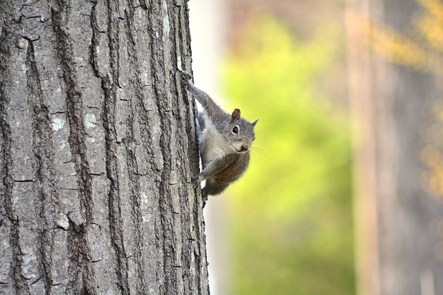 Tree, Wood, Nature, Outdoors, Squirrel
