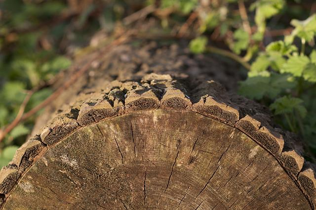 Tree, Stump, Tribe, Forest, Wood, Tree Ring