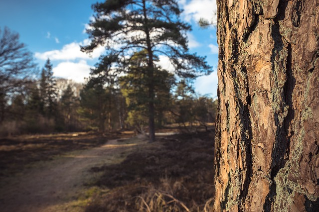 Nature, Tree, Wood, Landscape, Outdoors, Scenery