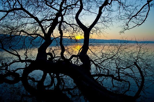 Tree, Nature, Landscape, Wood, Sun