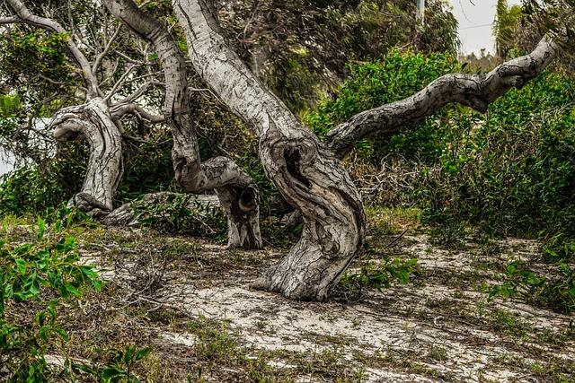 Tree Trunk, Bole, Dried, Nature, Wood, Scenery