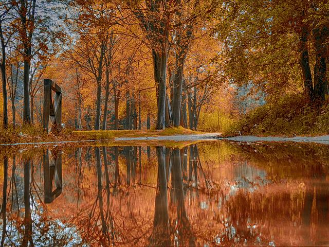 Tree, Wood, Nature, Autumn, Season, Water
