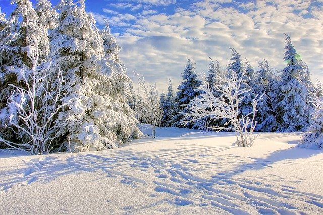 Snow, Frost, Winter, Cold, Tree, Frozen, Season, Wood