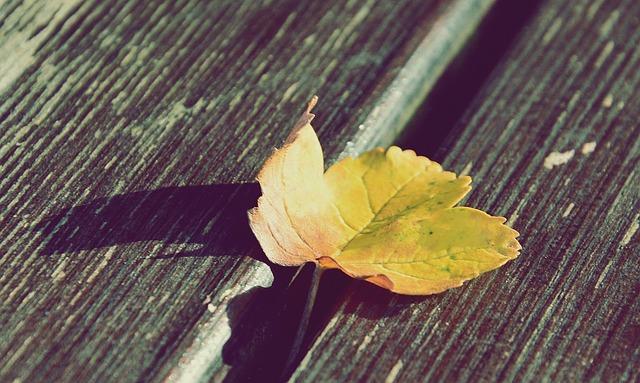 Yellow Leaf, Wood, Summer