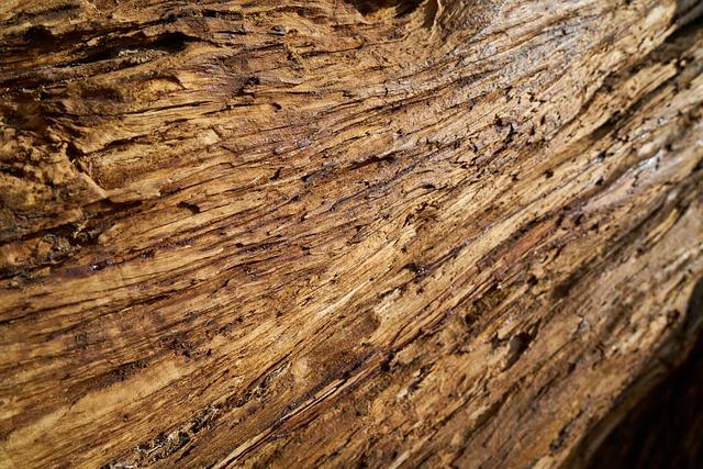 Tree, Texture, Wood-fibre Boards, Macro, Detail