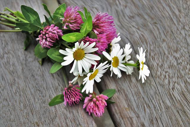 Bouquet, Wooden, Clover, Flower, Spring, Nature, Plant