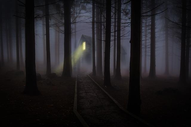 Foggy, Mist, Forest, Trees, Spooky, Haunted, Wooden