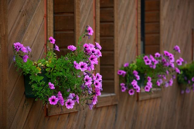 Flowers, Wooden, Plants, Nature, Ornament, Potted Plant