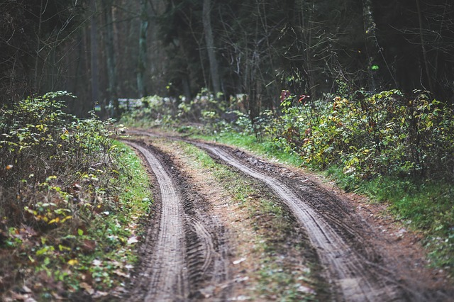 Road, Way, Path, Forest, Woods, Wood, Wooden, Mud, Fall