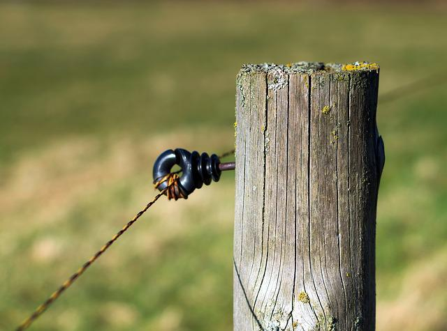 Nature, Wood, Animal World, Coupling, Wooden Structure