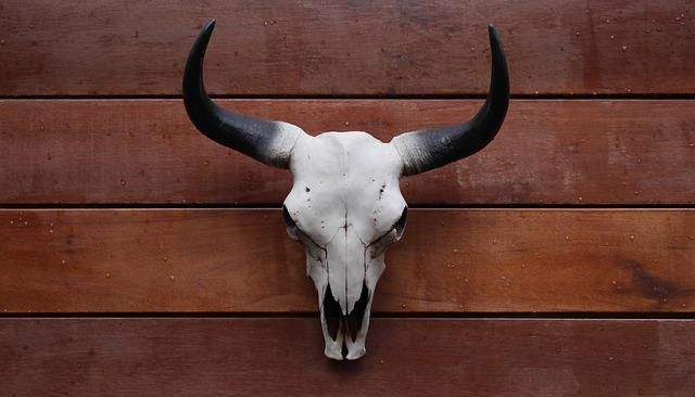 Wood, Animal, Mammal, Wooden, Bull Head