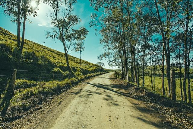 Tree, Road, Landscape, Walkway, Forest, Woodland