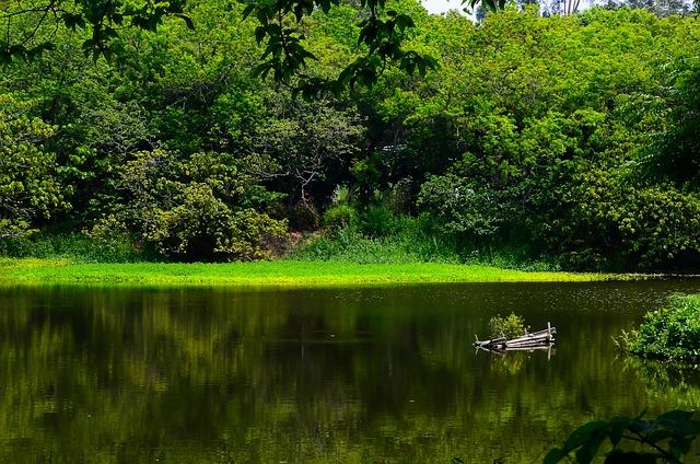 Kaohsiung, Niao Song I Manage, Woodland, Lake