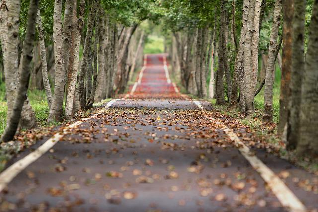 Avenue, Trees, Road, Tree Lined, Woodlands, Path