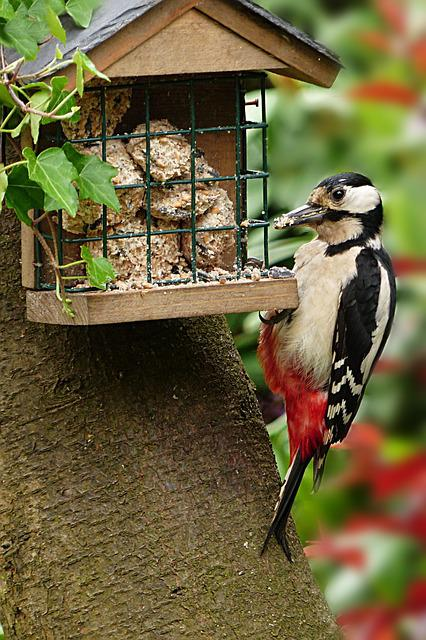 Animal, Bird, Woodpecker, Great Spotted Woodpecker