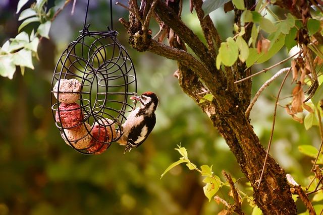 Woodpecker, Food, Fat Balls, Ring, Bird