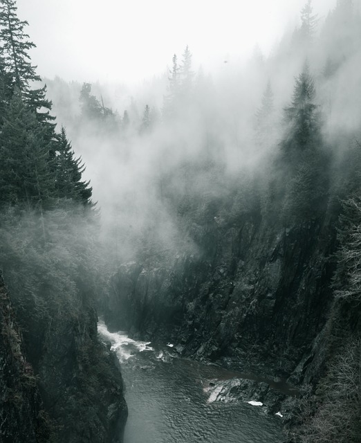 Woods, Fog, Forest, Mountains, Pacific, Wild, Beauty