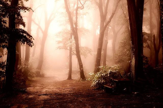Sunrise, Dawn, Morning, Forest, Trees, Woods, Fog, Haze