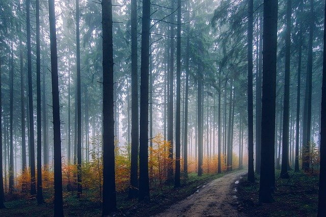 Landscape, Scenic, Fall, Autumn, Forest, Trees, Woods